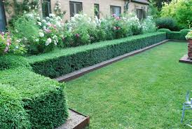 Fake Shrubs Trees U0026 Plants Lawnpro Landscapes Ltd