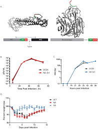 chemoenzymatic site specific labeling of influenza glycoproteins