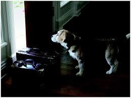 Cash for assistance Dogs International