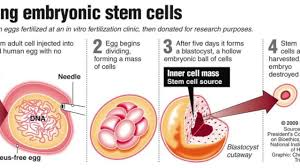 biotechnology project stem cells youtube