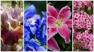 June Flowers - june flowers in season by lily u0027s florist santa clarita