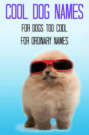 Cool Dog Meme - 50 best funny dog quotes meme images and pictures funnyexpo