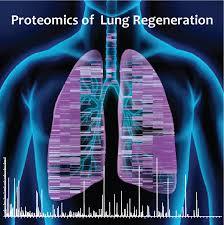 postdoctoral position lung regeneration basement membrane
