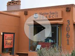 sonoran desert native plants traditional foods and medicine the arizona experience
