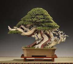 artificial bonsai bonsai empire