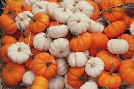 fall pumpkins wallpaper mini pumpkins nature moms blog nature moms