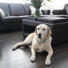 what is the best wood floor for and pets eagle creek floors