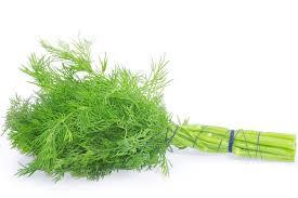 herbe cuisine aneth tout savoir sur cette herbe aromatique comment choisir l