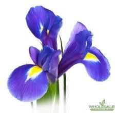 iris flowers iris flowers iris by the bunch