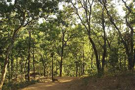 a path through a sparse forest and trees photograph by ashish agarwal