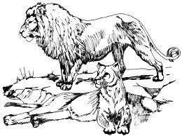 free lion coloring clipart 1 public domain clip art
