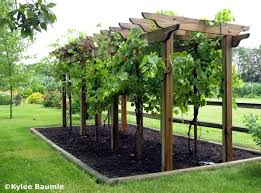 Trellis Arbor Designs Best 25 Grape Arbor Ideas On Pinterest Grape Vine Trellis