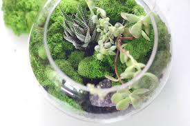 moss stone succulent terrarium workshop u2014 verde terrariums