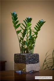 house plants no light 19 best houseplants you can grow without care snake plant minis