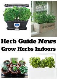 Herbs Indoors by Herb Guide Newsletter