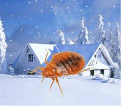 What Temperature Do Bed Bugs Die Can Bed Bugs Survive The Winter U2013 Bed Bug Sos Sos Punaise