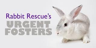 rabbit rescue providing homes for ontario u0027s rabbits u2026 one bunny