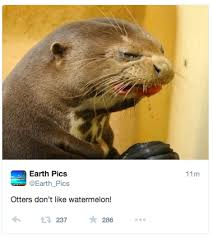 Otter Meme - ben otter meme tumblr