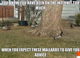 Funny Advice Memes - good advice duck