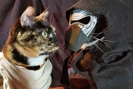 these pets in star wars costumes are ready for halloween