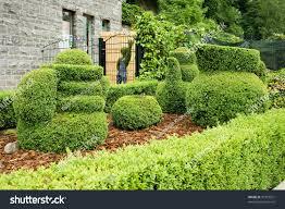 Horse Topiary 100 Bush Topiary Topiary Bushes Stock Photo Image 46148977