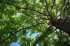 nj tree service company tree stump removal tree trimming