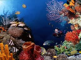 scuba diving underwater scene wallpaper free download