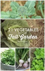 Fall Vegetable Garden Ideas by 25 Best Texas Fall Garden Ideas On Pinterest Fall Planting