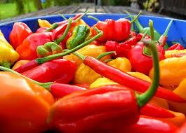 top 6 performance enhancing foods for men adam hart u0027s power of