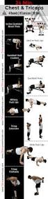 Bench Press For Biceps - best 25 great chest workouts ideas on pinterest dumbbell