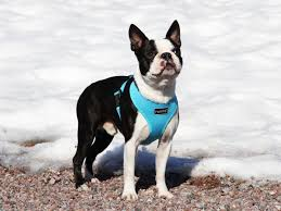 Four Paws Comfort Control Harness Comfort Harness Spring Summer 2017 By Rukka Pets Comfort