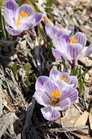best garden flowers to attract bees longfield gardens