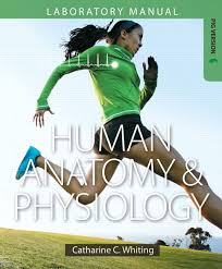 Lab Practical Anatomy And Physiology Martini Ober Nath Bartholomew U0026 Petti Visual Anatomy