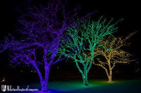 New Year Lighting Decorations by Green Walls Office Plants Mcfarlane Douglass