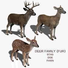 model deer family fur