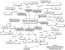 body systems concept map health pinterest body systems