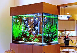 Realistic Fish Tank Decoration Ideas