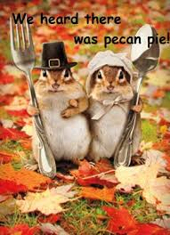i m thankful every day not just on thanksgiving what s peeps