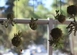 indoor urban gardening ideas wine time indoor urban gardening