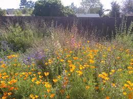 california native landscape sarah rosenhaus interior design