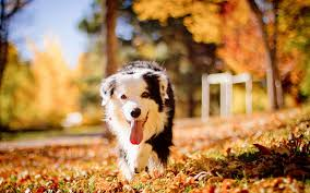 Wallpaper Dogs Dog Walking On Autumn Park Wallpaper 4892 Wallpaper Themes