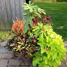Summer Container Garden Ideas 26 Best Container Gardening Sun Images On Pinterest