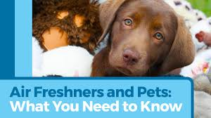 are air fresheners safe for pets petmd