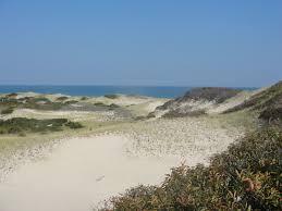 sandy neck beach mary richmond u0027s cape cod art and nature
