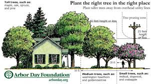 plant the right tree in the right place peco an exelon company