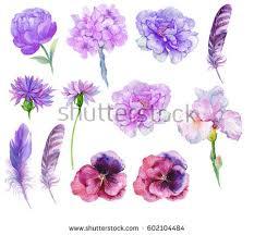 set watercolor flowersfeathers purple floweriris garden stock