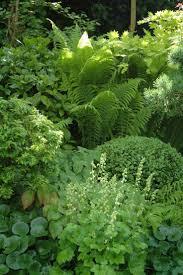 best 25 woodland garden ideas on pinterest forest garden