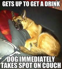 German Shepherd Memes - top 8 funny german shepherd memes that broke the internet