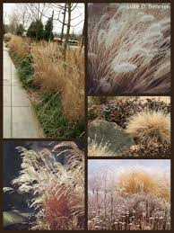 ornamental grasses reclaiming nature