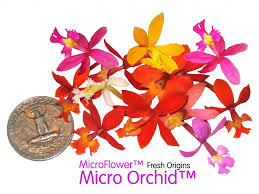 flower fruit edible flowers firestix sparklers microflower blend freshorigins